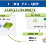 LED型植物工場、広がる可能性
