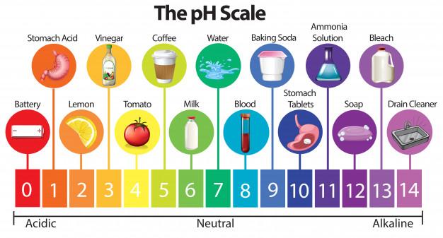 生体の血液の酸塩基平衡は一定のpH (7.4) になるように保たれている。