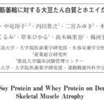 大豆たん白質~ホエイたん白質、比率は、1:1がベスト 筋力アップ