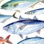 魚油とピーナッツのコラボ オメガ3とアルツハイマーの関係